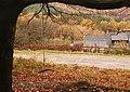 Forest swing, Bradley Hill, Soudley, Forest of Dean - geograph.org.uk - 1044777.jpg