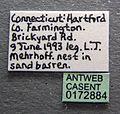 Formica incerta casent0172884 label 1.jpg