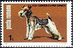 Fox-Terrier-Canis-lupus-familiaris Romania 1981.jpg
