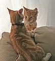 Fred and George 3 (2935247739).jpg
