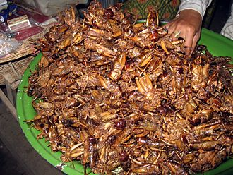 Entomophagy - Fried sautéed crickets