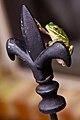 Frog de lis in Madisonville.jpg