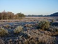 Frosty Heath - geograph.org.uk - 80822.jpg