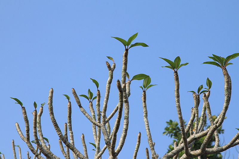 File:Funny Trees (4328015736).jpg
