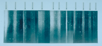 Dye 3 - 19 cm long section of GISP 2 ice core from 1855 m showing annual layer structure illuminated from below by a fiber optic source. Section contains 11 annual layers with summer layers (arrowed) sandwiched between darker winter layers.