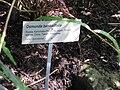 Gardenology.org-IMG 0805 rbgs10dec.jpg