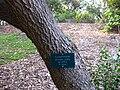 Gardenology.org-IMG 2546 ucla09.jpg