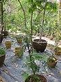 Gardenology.org-IMG 7234 qsbg11mar.jpg