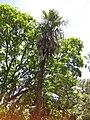 Gardenology.org-IMG 9811 rbgm10dec.jpg