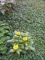 Gardens in Baghdad 26.jpg