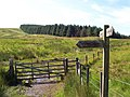 Gate through border fence from Scotland into England - geograph.org.uk - 1475651.jpg