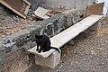 Gato negro en Mancha Blanca, Lanzarote.jpg