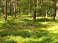 Gelbensander Forst waldboden.jpg