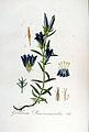 Gentiana pneumonanthe — Flora Batava — Volume v5.jpg