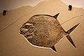 Gfp-moonfish.jpg