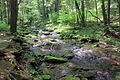 Gfp-pennsylvania-sinnemahoning-state-park-rushing-stream.jpg