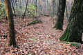 Gfp-wisconsin-blue-mound-state-park-looking-down-the-hiking-trail.jpg