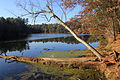 Gfp-wisconsin-mirror-lake-state-park-tree-hanging-into-lake.jpg