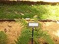 Giardino botanico di Brera (Milan) 190.jpg