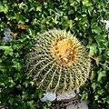 Gibraltar cactus.jpg