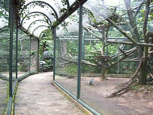 Cage - Image: Glass cage smutzer ragunan