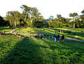 Golden Gate Park (3617486491).jpg