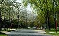 Gordonstraße - panoramio.jpg