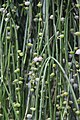 "Gradina Botanica ""Vasile Fati"" (4657259894).jpg"