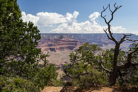 Grand Canyon (Arizona, USA), South Rim nahe Tusayan -- 2012 -- 29.jpg