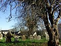 Graveyard and diseased tree - geograph.org.uk - 619754.jpg