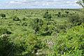 Green Savannah from Mlondozi (16808939812).jpg