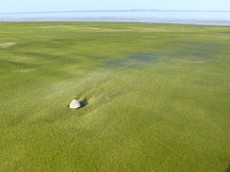 File:Green sand in Kourou.jpeg