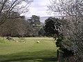 Grounds of Nunwick Hall - geograph.org.uk - 153652.jpg
