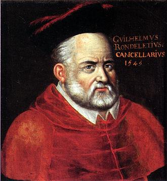 Guillaume Rondelet - Guillaume Rondelet in 1545
