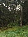 Gwaii Haanas National Park (27277804160).jpg