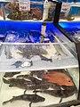 HK 九龍塘 Kln Town 又一城商場 Festival Walk mall shop Taste by 百佳超級市場 ParknShop Supermarket goods December 2020 SS2 46.jpg