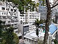 HK ML 香港半山區 Mid-levels 上亞厘畢道 Upper Albert Road flora view Lower Albert Road April 2020 SS2 01.jpg