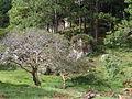 HN078sMarcs~Pine-Cove2.jpg