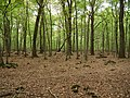 Hambach forest 14.jpg