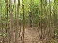 Hambach forest 22.jpg