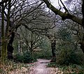 Hampstead Heath - geograph.org.uk - 1125700.jpg