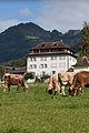 Haus Ceberg Schwyz www.f64.ch-2.jpg