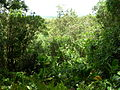 Hawaii - Ein Krater.JPG
