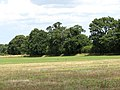 Hay field adjoining farm track - geograph.org.uk - 1411344.jpg