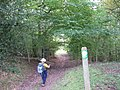 Hereford trail near Bacton - geograph.org.uk - 1194088.jpg