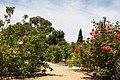 Heritage Rose Garden, San Jose - panoramio (1).jpg