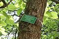 Herten - Schlosspark - Trompetenbaum 01 ies.jpg