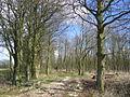 Heslerton Wold - Plantation - geograph.org.uk - 154170.jpg