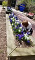 Hofstra University Spring (41641030802).jpg