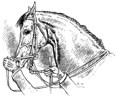 Horsemanship for Women 036.png